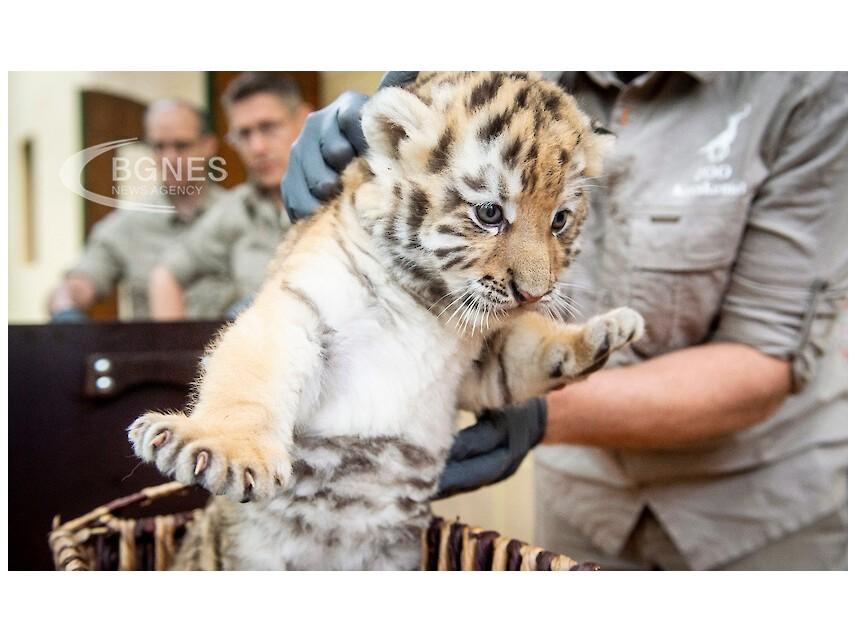 """""""Не на насилието"""" в Световния ден за защита на животните"""