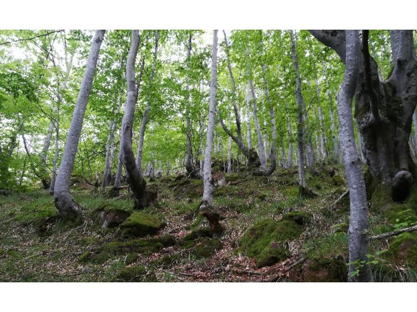 Проверка на състоянието на старите гори у нас