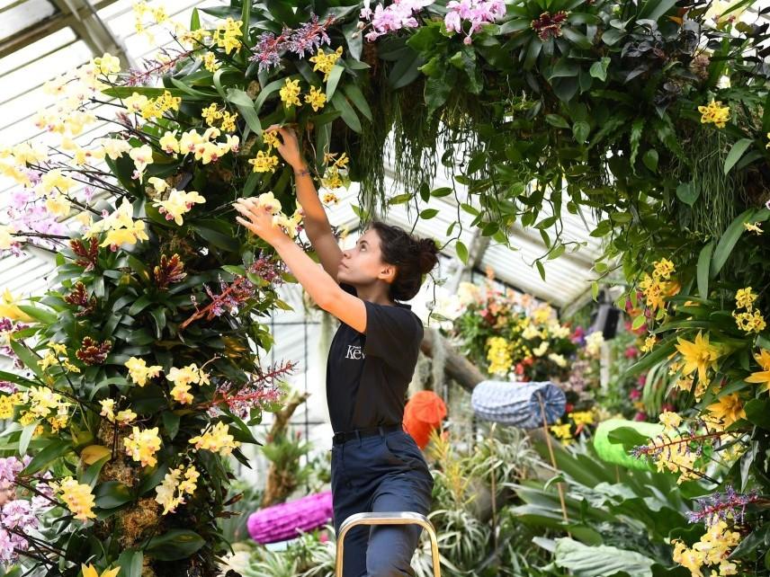 Британските кралски ботанически градини имат най-голямата колекция от живи растения в света