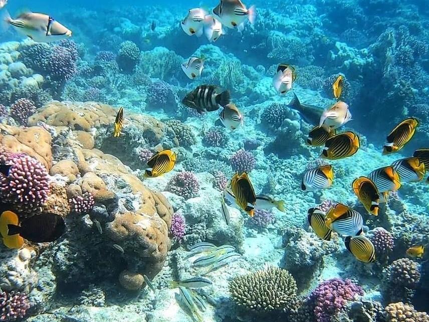 Застрашен е Големият бариерен риф